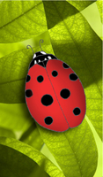 business card - ladybug